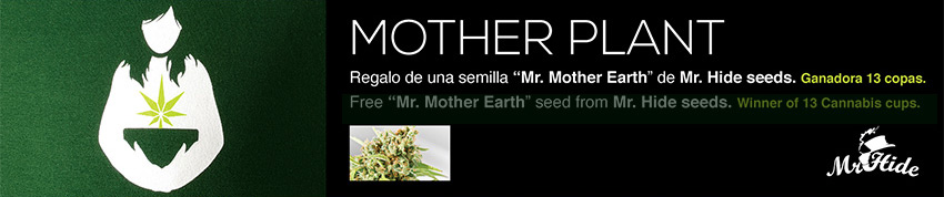 MOTHER PLANT PROMOTION SEED mr hide 420